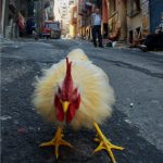 "Exposition ""Tarlabaşı:  quartier profane d'Istanbul"""